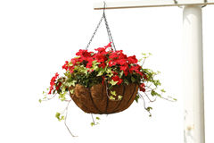 hänga för blommor royaltyfria foton