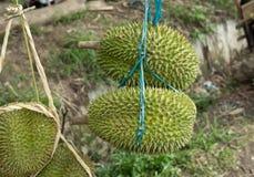 Hänga för Durians som är till salu Arkivbild