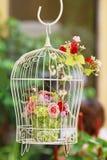 hänga för fågelfall Royaltyfria Foton