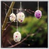 hänga för filialeaster ägg Royaltyfri Fotografi