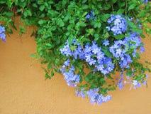 hänga för pelargoner Fotografering för Bildbyråer