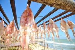 Hänga för tioarmad bläckfisk Arkivfoto
