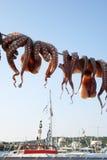 hängande bläckfisk Royaltyfria Foton