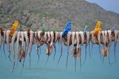 hängande bläckfisk Arkivbild