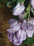 Hängande blomma Arkivbilder