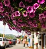 Hängande blommor Arkivfoton