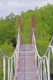 hängande bro i mangroveskogen Arkivfoto