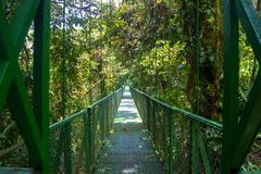 Hängande bro i molnskogen, Monterverde royaltyfria bilder