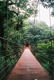 Hängande bro i Monteverde Costa Rica arkivbild