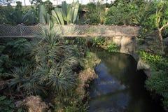 Hängande bro i rainforesten Royaltyfri Bild