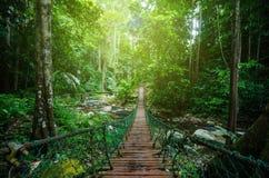 Hängande bro som korsar floden som omges av den gröna regnskogen Royaltyfri Foto