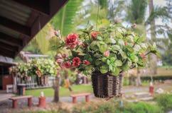 Hängande korg av blommatappning Royaltyfri Bild