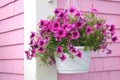 hängande petunia för korg Arkivbilder