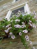 hängande planter Royaltyfri Foto