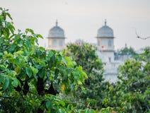 Hängande slagträn i Udaipur Arkivfoton