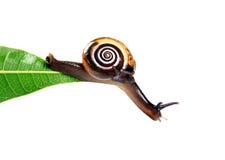 hängande snail royaltyfri foto