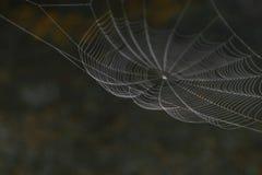 Hängande spindelrengöringsduk framme av bruntet och den oskarpa naturbakgrunden royaltyfria foton