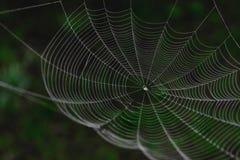 Hängande spindelrengöringsduk framme av gräsplanen och den oskarpa naturbakgrunden fotografering för bildbyråer