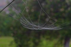 Hängande spindelrengöringsduk framme av gräsplanen och den oskarpa naturbakgrunden royaltyfria foton