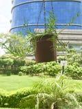Hängande växtkruka arkivfoton