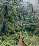 Hängebrücke hergestellt im Wald lizenzfreie stockbilder