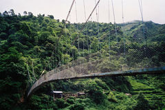Hängebrücke im Regenwald Stockfotos