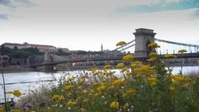 Hängebrücke mit gelben Blumen stock video