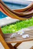 Hängematte und tropische Blumen Lizenzfreie Stockfotos