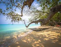 Hängematte unter einem Baum auf dem Strand Stockfotos