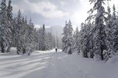 Hängen Sie Junggesellen XC Ski fahrend ein Lizenzfreies Stockbild