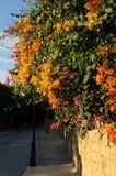 Hängende blühende Winterzeit der orange Blumen Stockfoto
