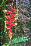 Hängende Blume Stockfotografie