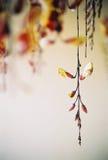 Hängende Blumen Lizenzfreie Stockfotografie