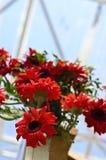Hängende Blumen Stockbilder