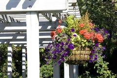 Hängende Blumen in einem Garten lizenzfreies stockfoto