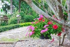 Hängende Blumenkörbe Lizenzfreies Stockbild