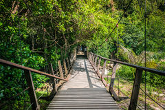 Hängende Brücke in einem Wald Stockfotos