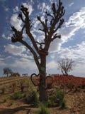 Hängende Herzen in einem Baum lizenzfreies stockbild