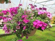 Hängende Körbe gefüllt mit bunten Blumen stockbild