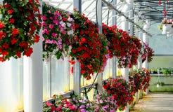 Hängende Körbe von Blumen Lizenzfreies Stockfoto