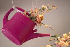 Hängende rosa Plastikgießkanne, gefüllt mit Rosen und Gartennelkenblume, gegen rosa weißen Hintergrund lizenzfreie stockfotos
