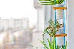 Hängende upcycled Plastikblumentöpfe Lizenzfreies Stockbild