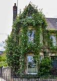 Hängende weiße Rosen auf einem alten Haus in Cambridge lizenzfreies stockbild