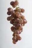 Hängende Weintraube Lizenzfreies Stockbild