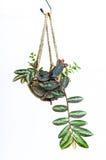 Hängende Zimmerpflanze, Häkelarbeitarbeit stockbild