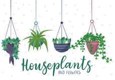 Hängende Zimmerpflanzen und Blumen in den Töpfen Stockfotografie