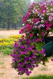 Hängender Blumen-Korb Stockfotografie