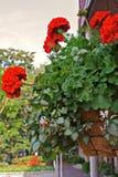 Hängender Blumen-Korb Lizenzfreie Stockfotos