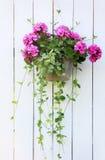 Hängender Blumenkorb Stockfotos