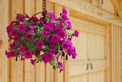 Hängender Blumenkorb Lizenzfreies Stockfoto